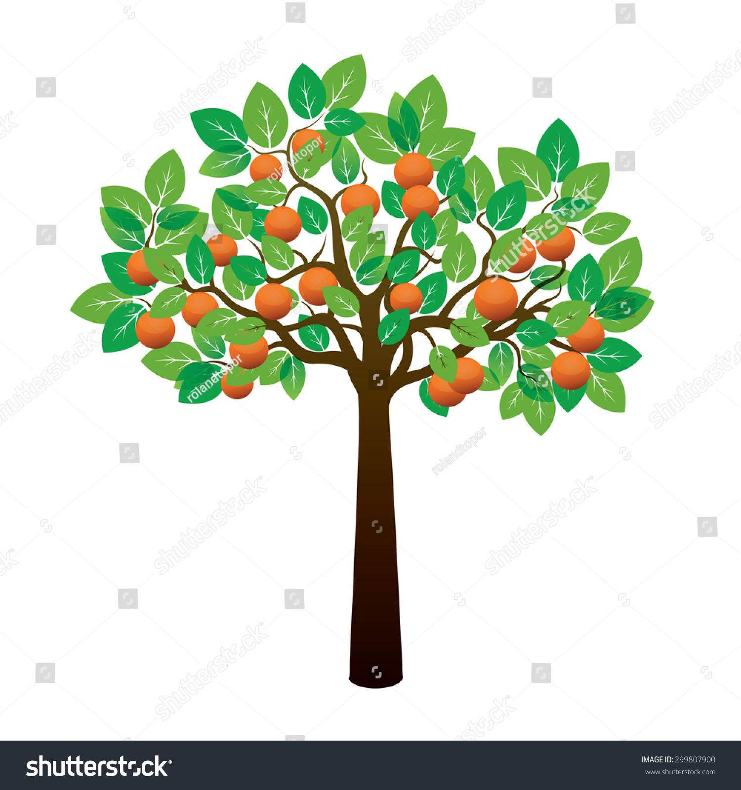 Orange Tree Fruits Vector Illustration Stock Vector ...