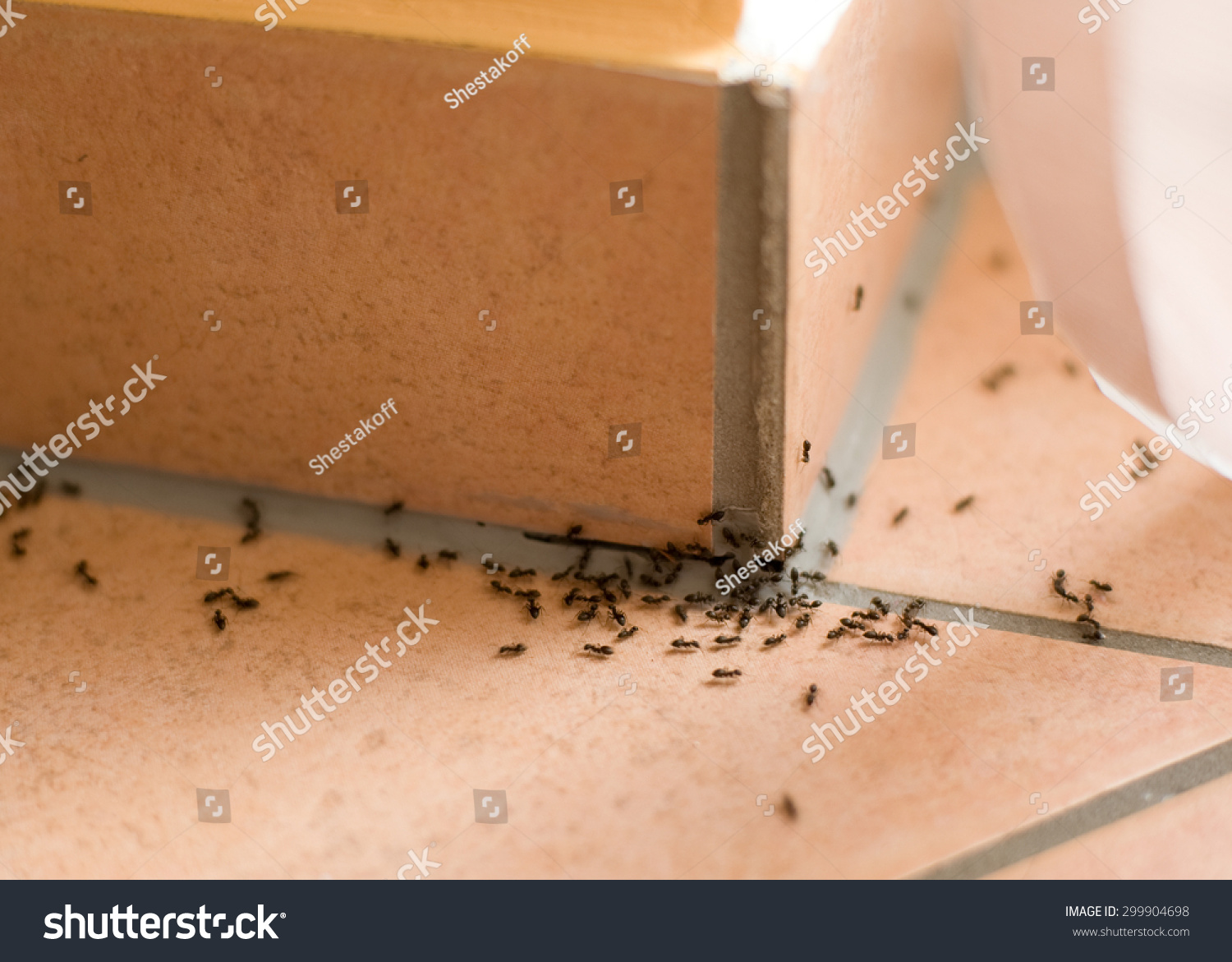 how to kill ants inside home