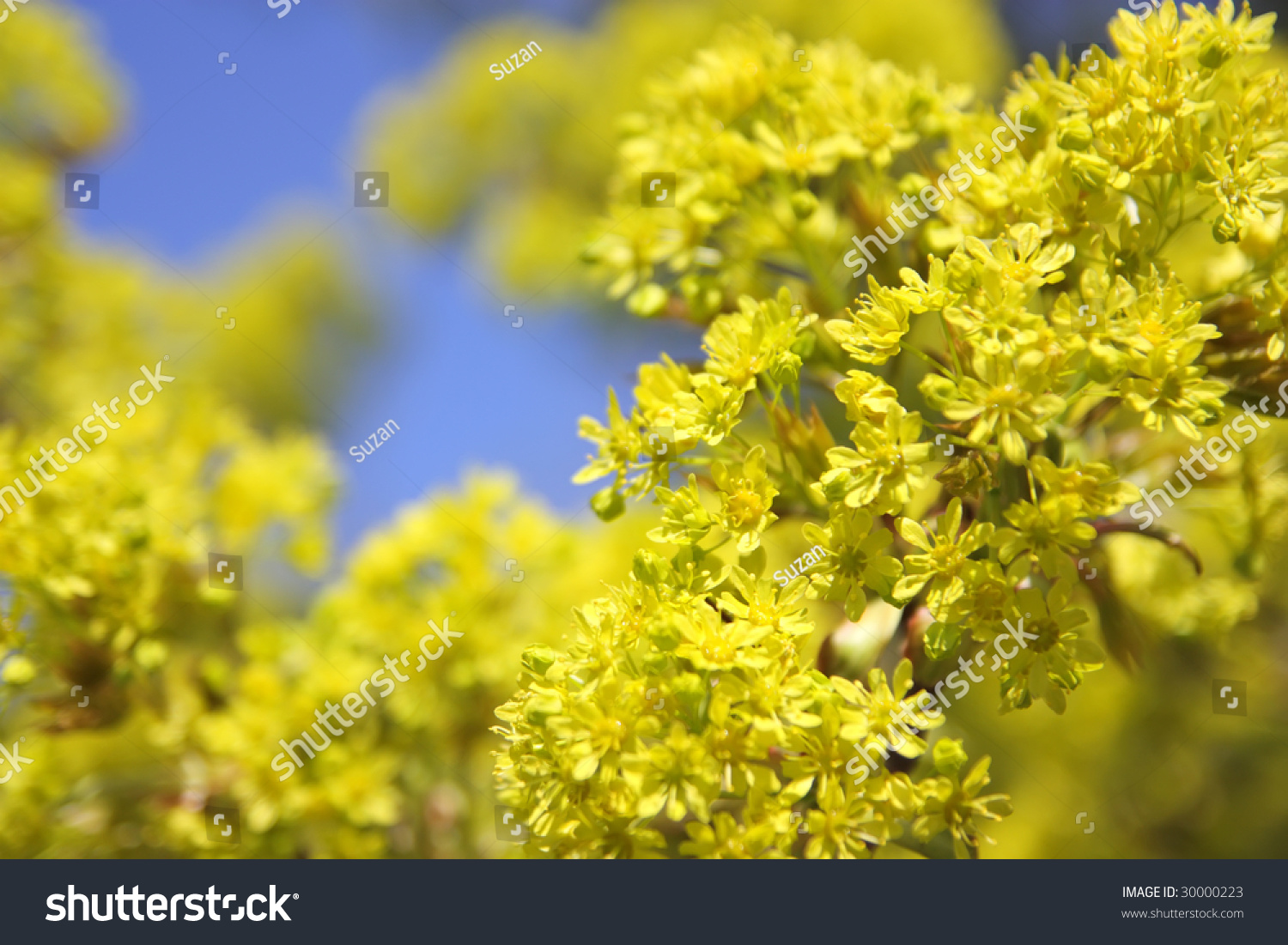 Bright Spring Flowers On Sky Background Ez Canvas