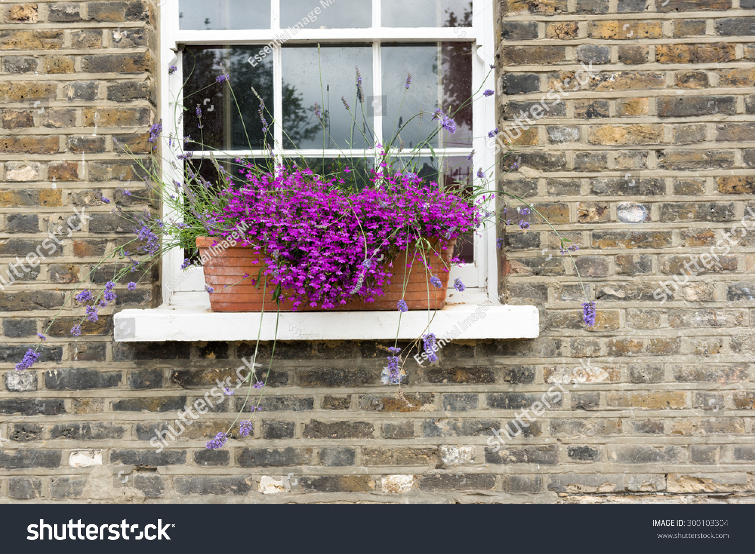 Pretty Purple Flowers Window Box Brick Stock Photo Edit Now