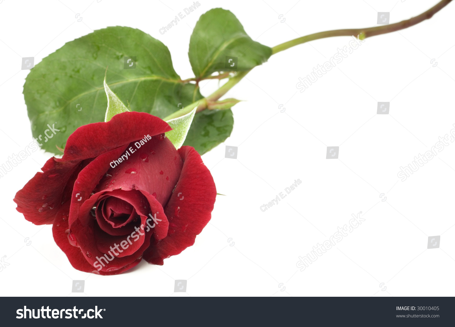 Red Rose With Stem