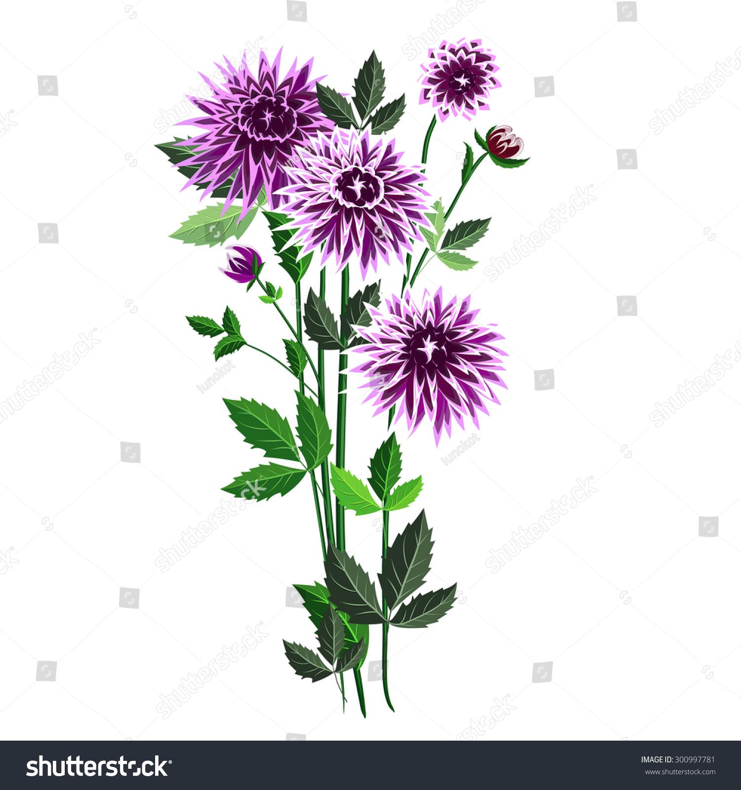 Autumn Purple Dahlias Tips Petals White Stock Vector Royalty Free