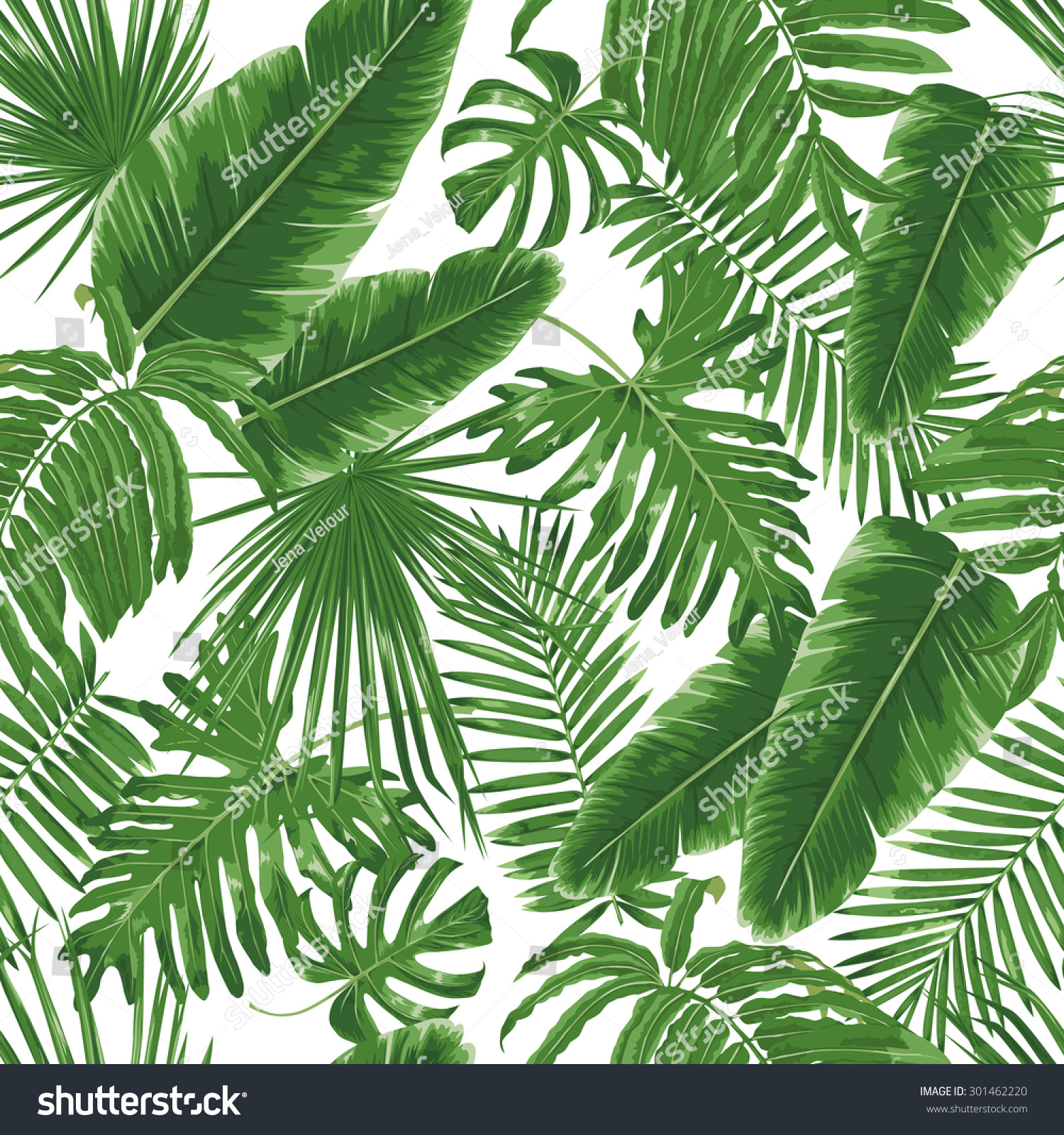 Jungle Leaf Patterns Palm Stock Photos Images amp Pictures