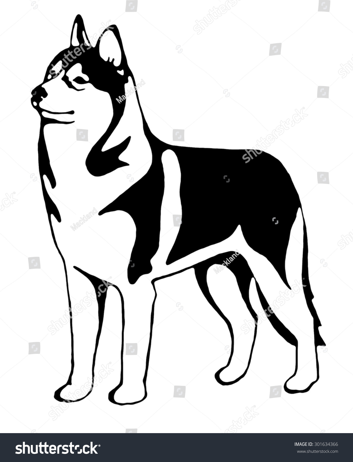 black white siberian husky graphic stock illustration 301634366