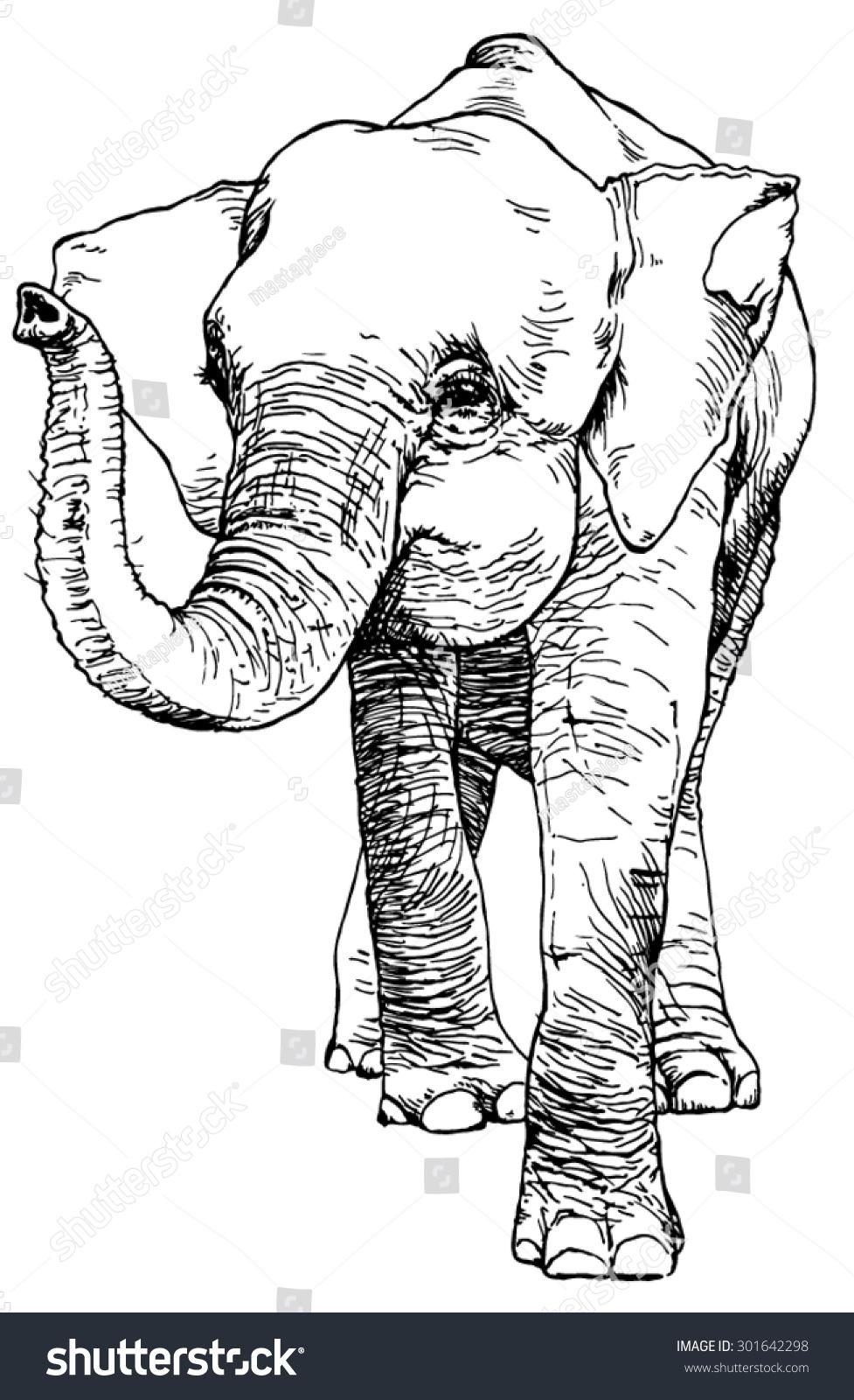 hand drawn sketch asian pygmy elephant stock vector 301642298
