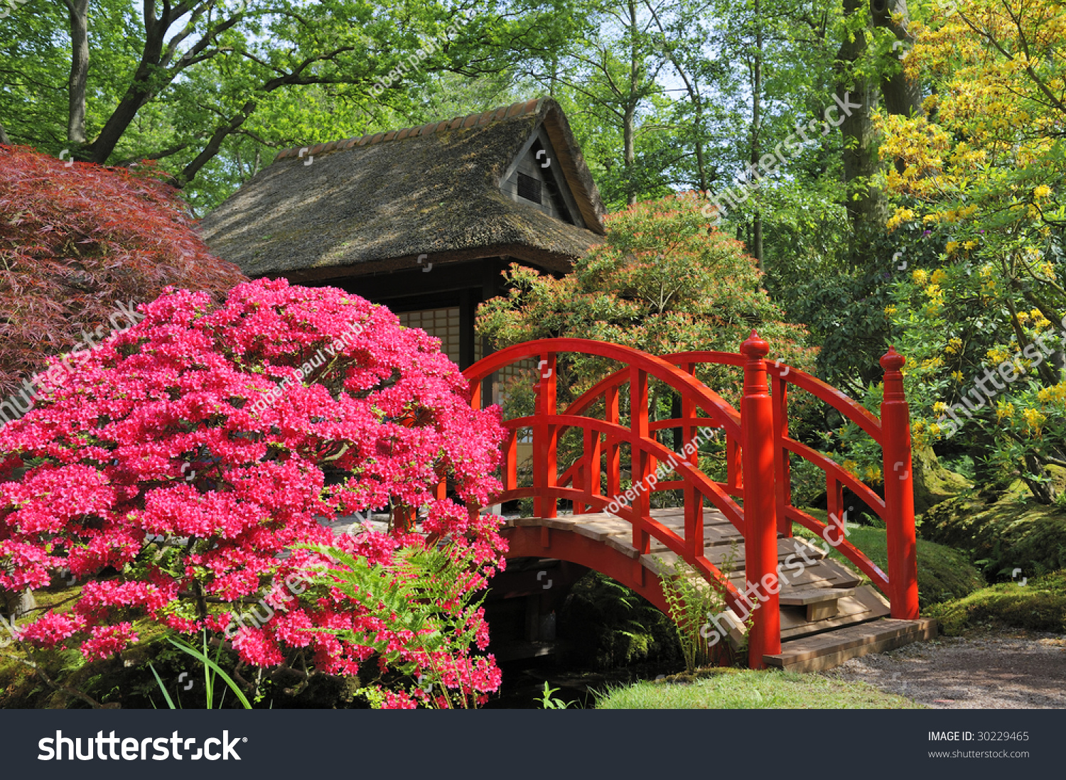 red japanese garden bridge japanese garden flowers red bridge stock photo - Red Japanese Garden Bridge