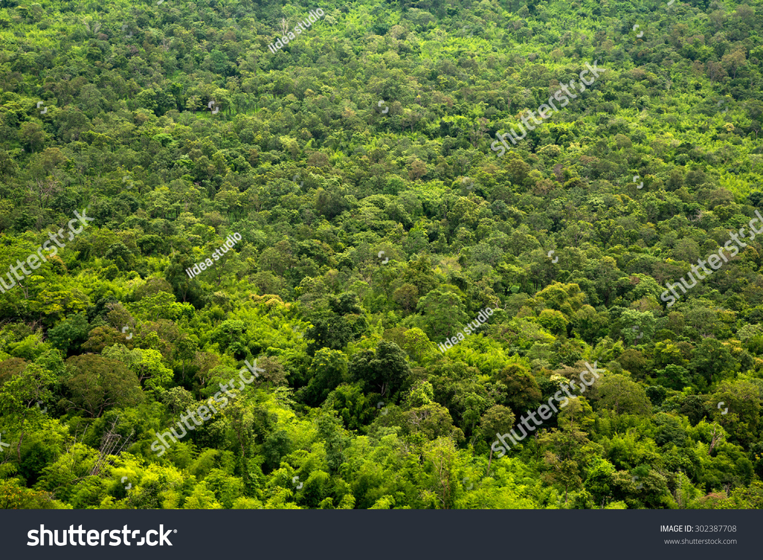 Trees Top View Texture Background Stock Photo Royalty Free For Landscape