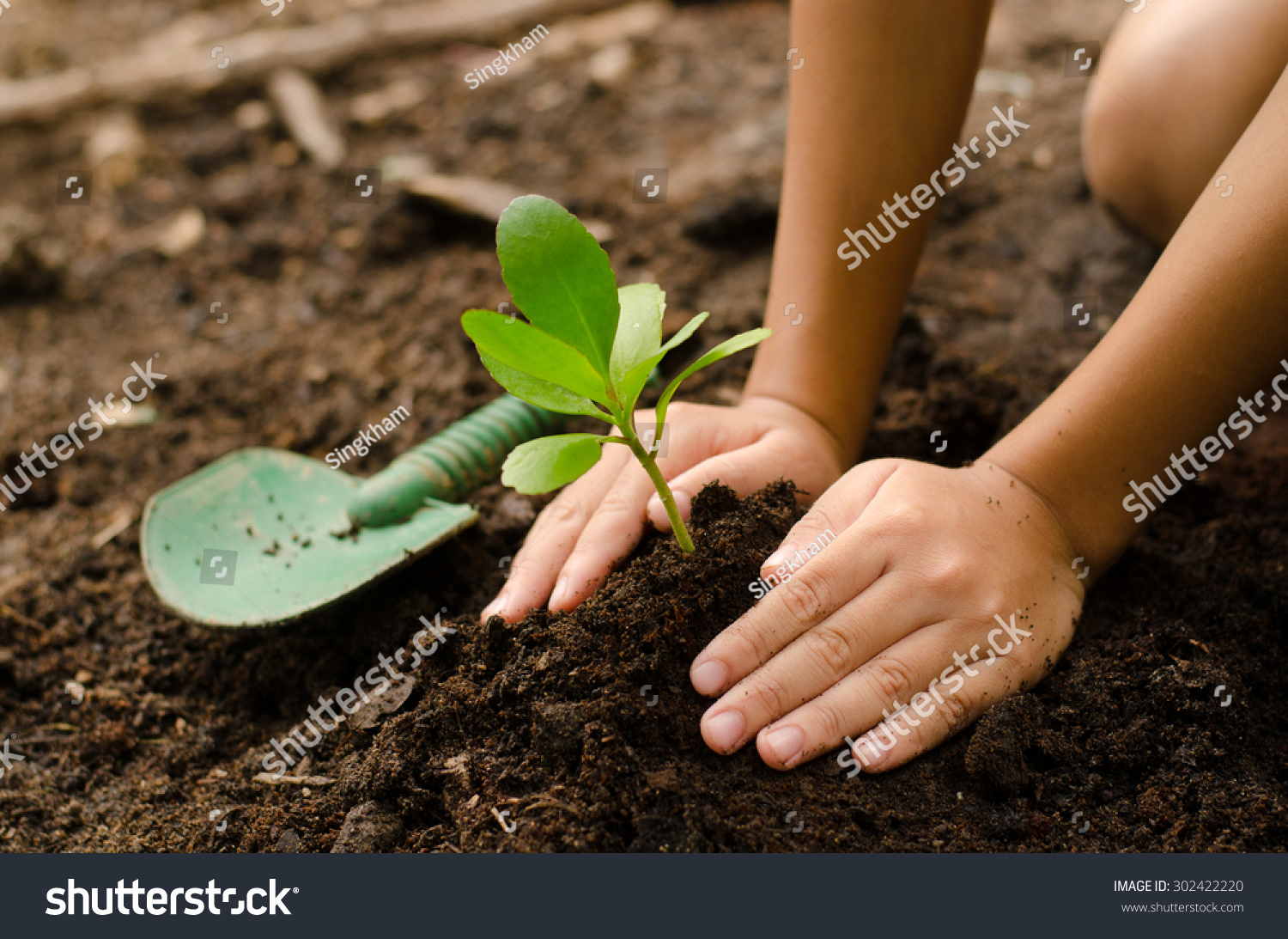Planting young tree by kid hand on back soil as care and for Soil young s modulus