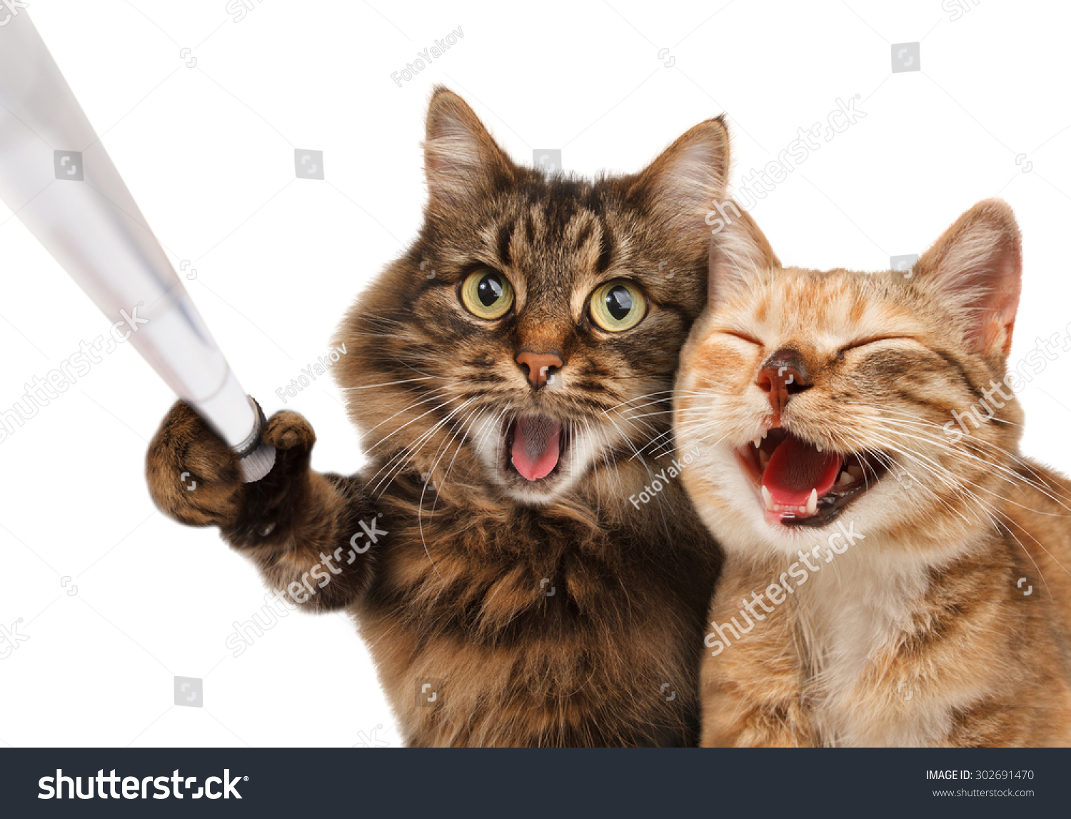 Funny Cats Self Picture Couple Cat Stock Photo Edit Now 302691470