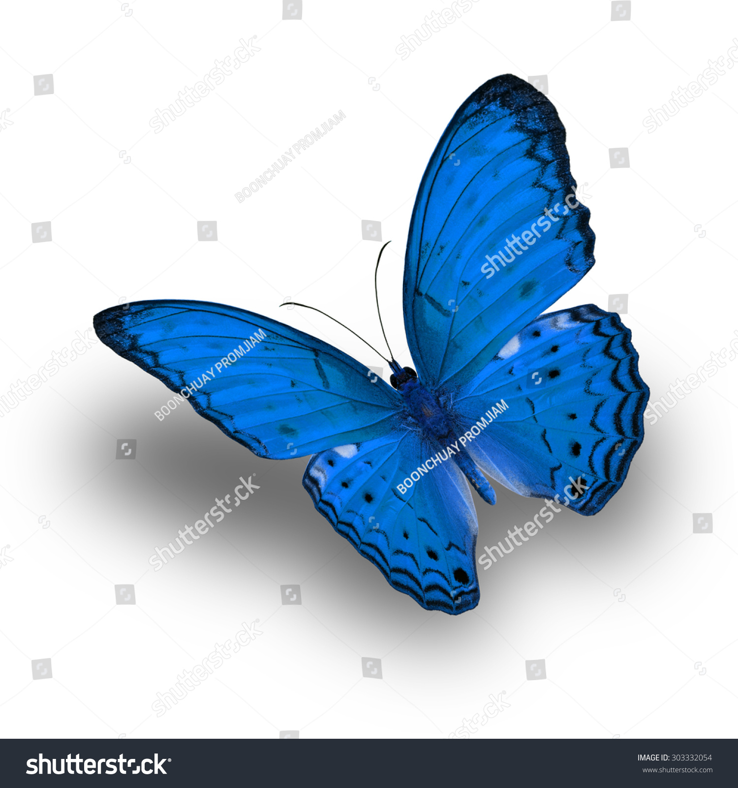 Beautiful Light Blue Bedrooms: Beautiful Light Blue Butterfly Upper Wing Stock Photo