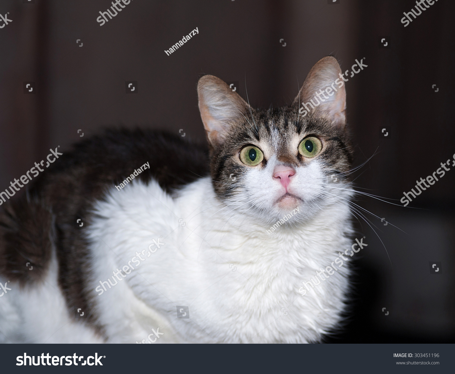 White Tabby Cat On Dark Background Stock Photo (Royalty Free ...