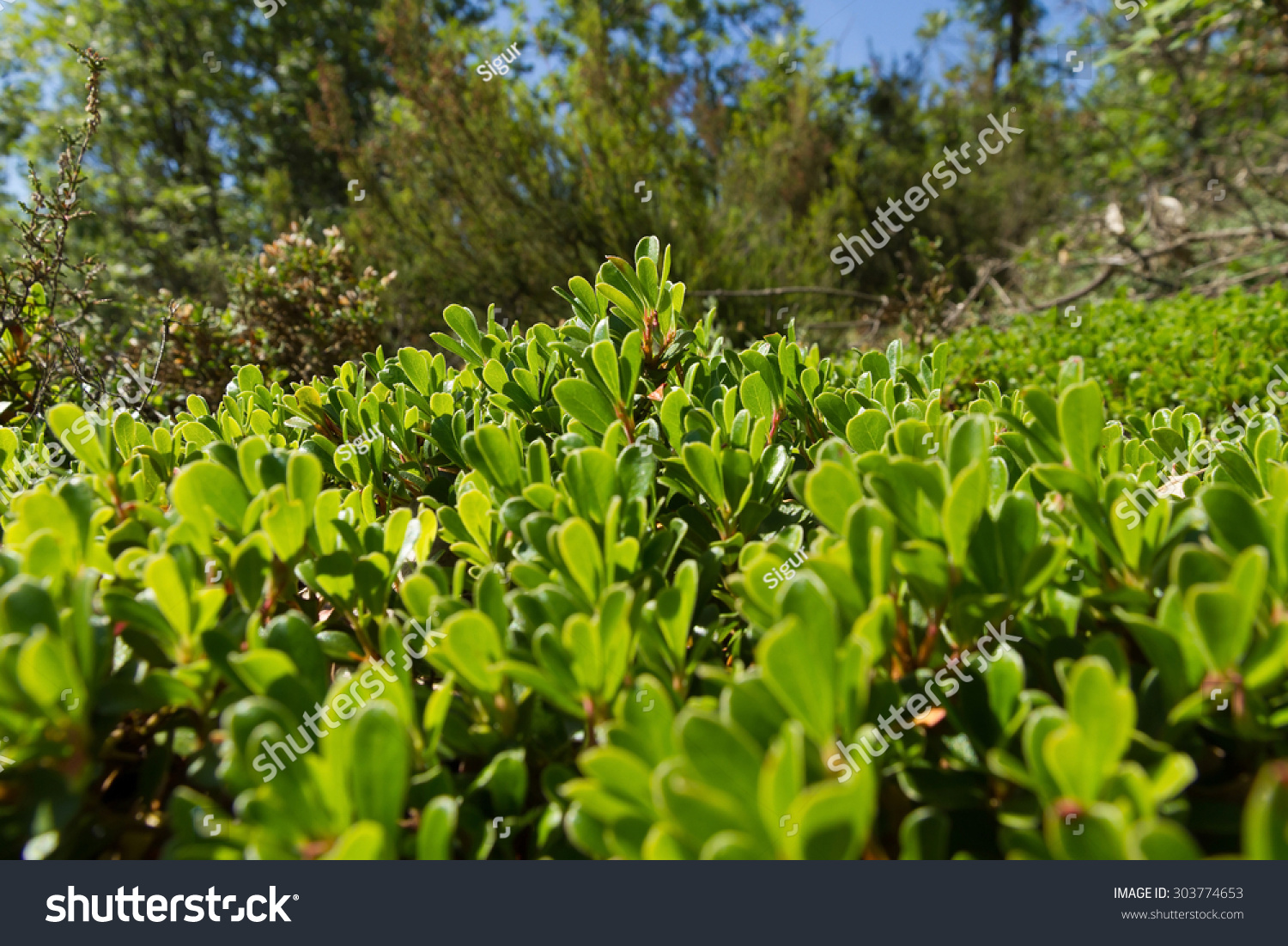 properties of plants in the forest Quality of plant growth  soil types and fundamental soil properties of a costa rican tropical montane cloud forest  soil types and fundamental soil properties .