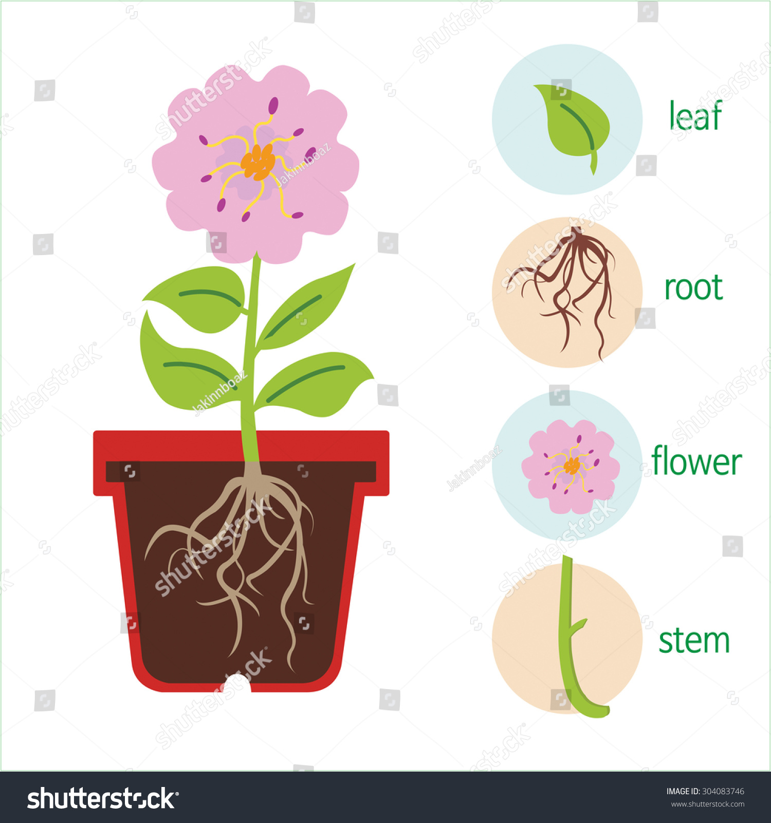 Diagram plant flower consists stem roots stock vector 304083746 a diagram of a plant a flower consists of a stem roots leaves pooptronica Images