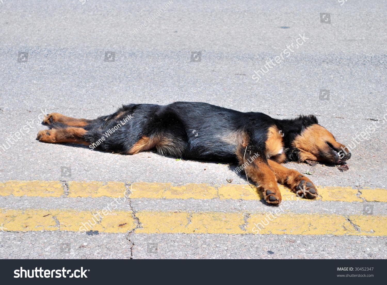 dog photo road - photo #27