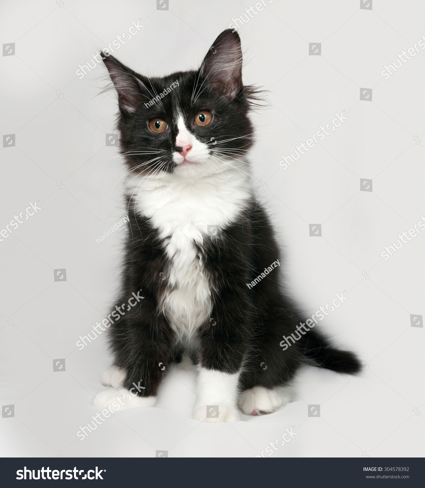 Black and white fluffy kitten sits on gray background | EZ Canvas