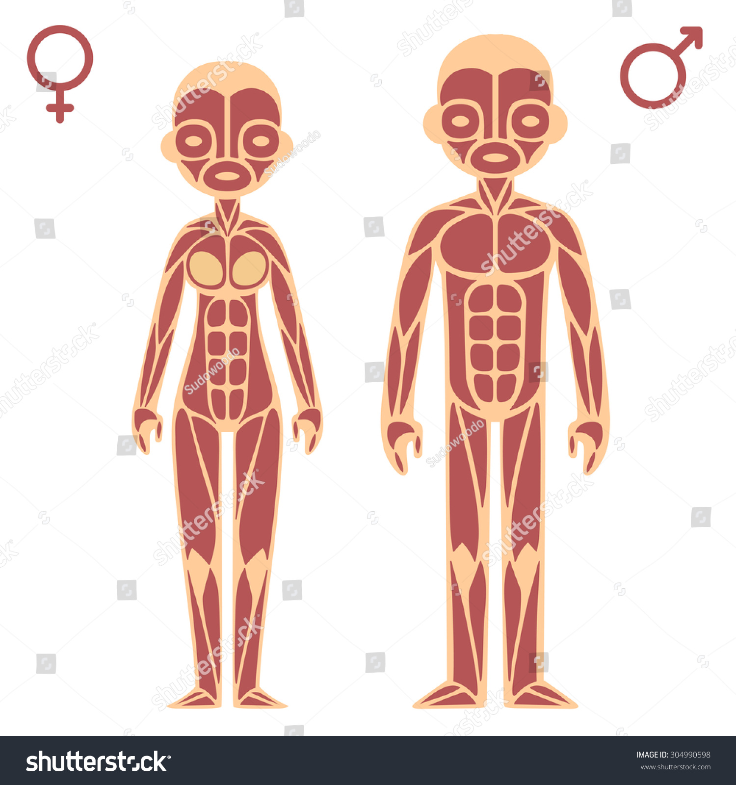 Stylized Cartoon Male Female Muscle Charts Stock Vector (Royalty ...
