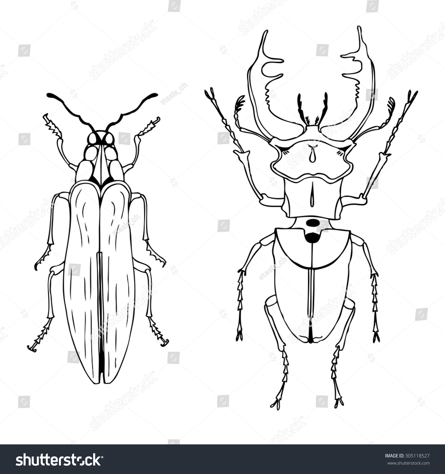 vector ink drawn beetles set two stock vector 305118527 shutterstock