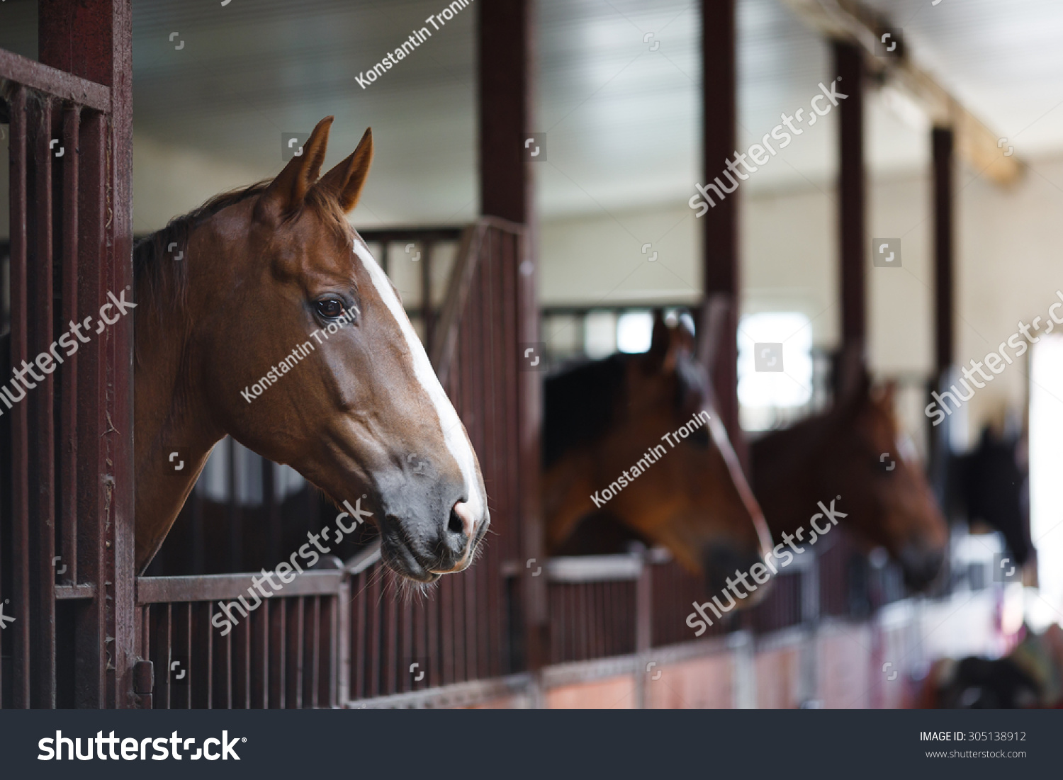 Head of horse looking over the stable doors on the background of other horses & Head Horse Looking Over Stable Doors Stock Photo 305138912 ... pezcame.com