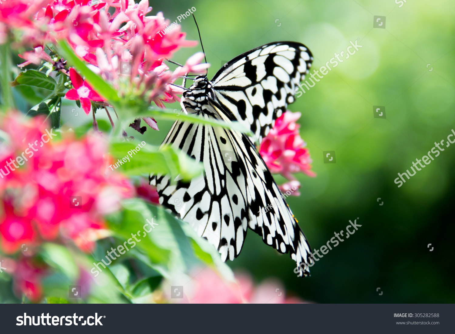 Paper Kite Butterfly White Black Color Stock Photo Edit Now
