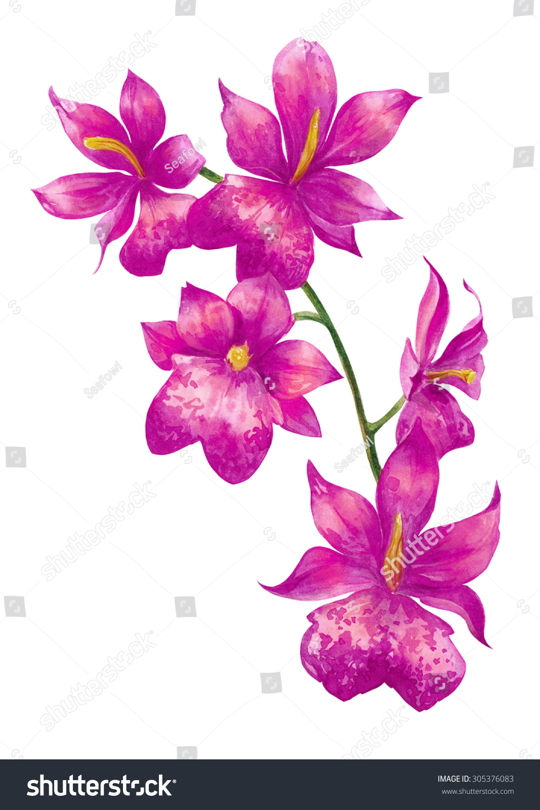 Watercolor Tropical Pink Orchid Flower Five Stock Illustration