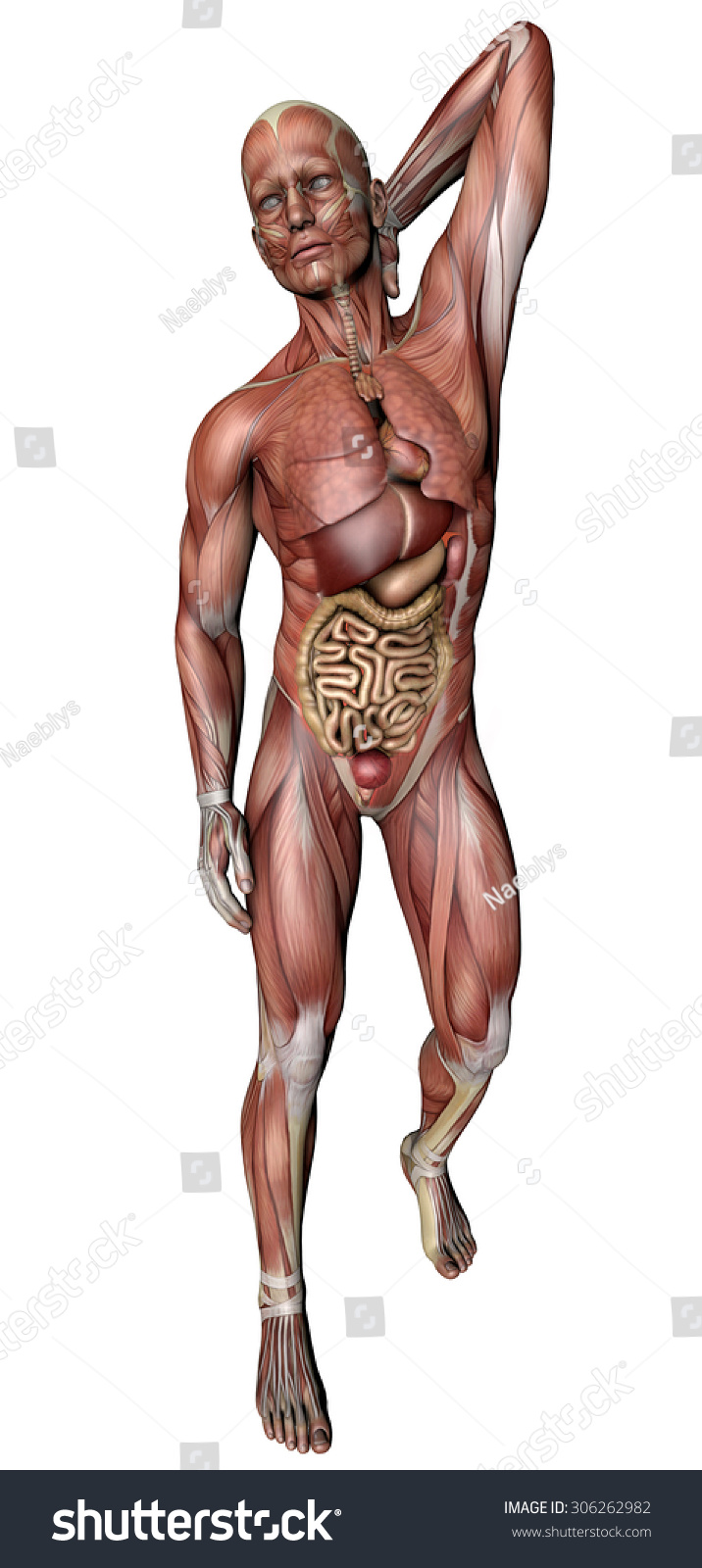 Royalty Free Stock Illustration of Man Anatomy Body Muscles Skeleton ...