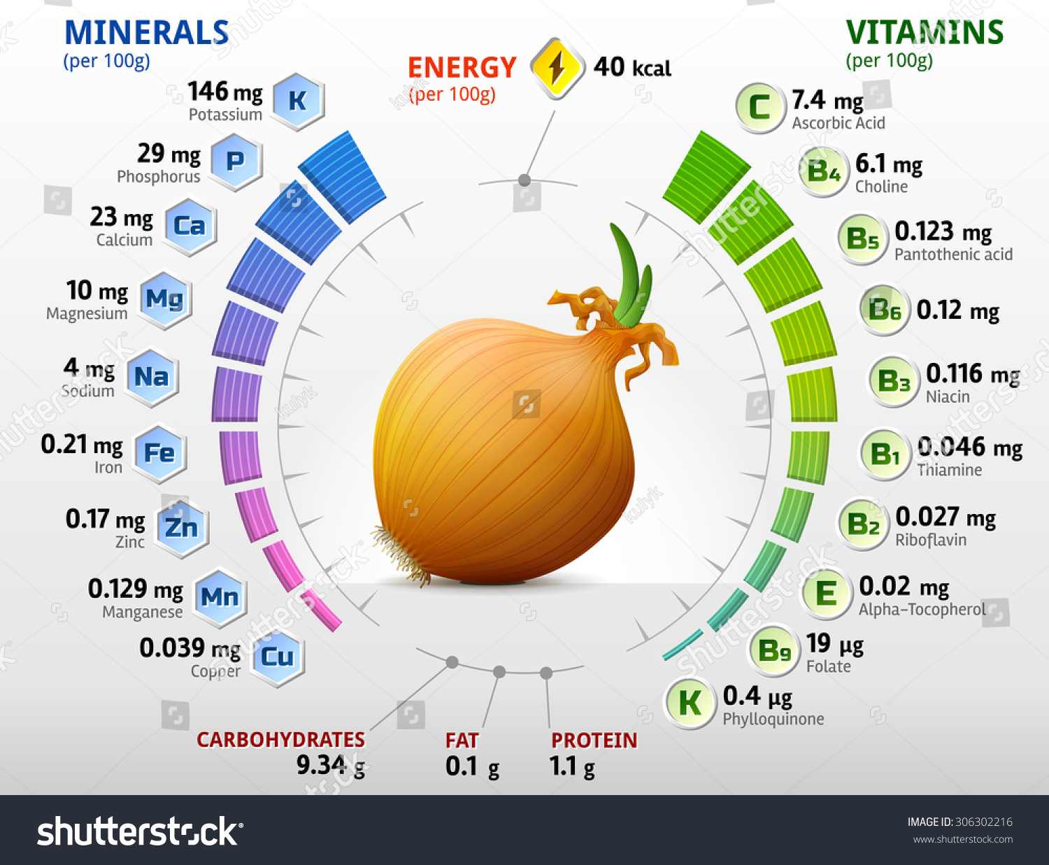 vitamins minerals common onion infographics about stock