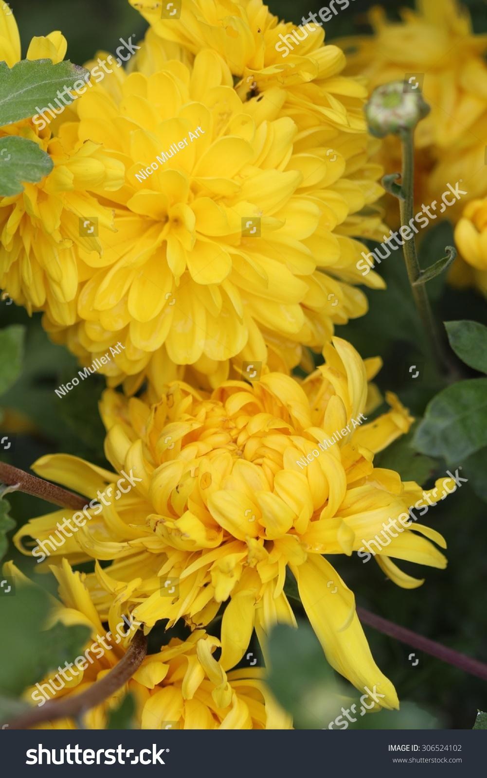 Yellow Flowers Bouquet Ez Canvas