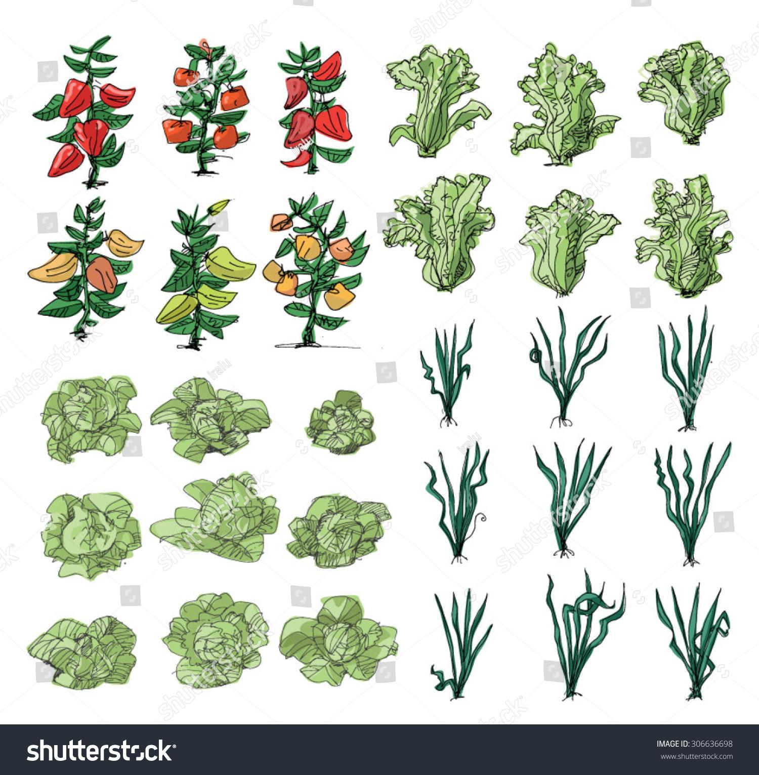 Kitchengarden Cartoon Stock Vector 306636698 - Shutterstock