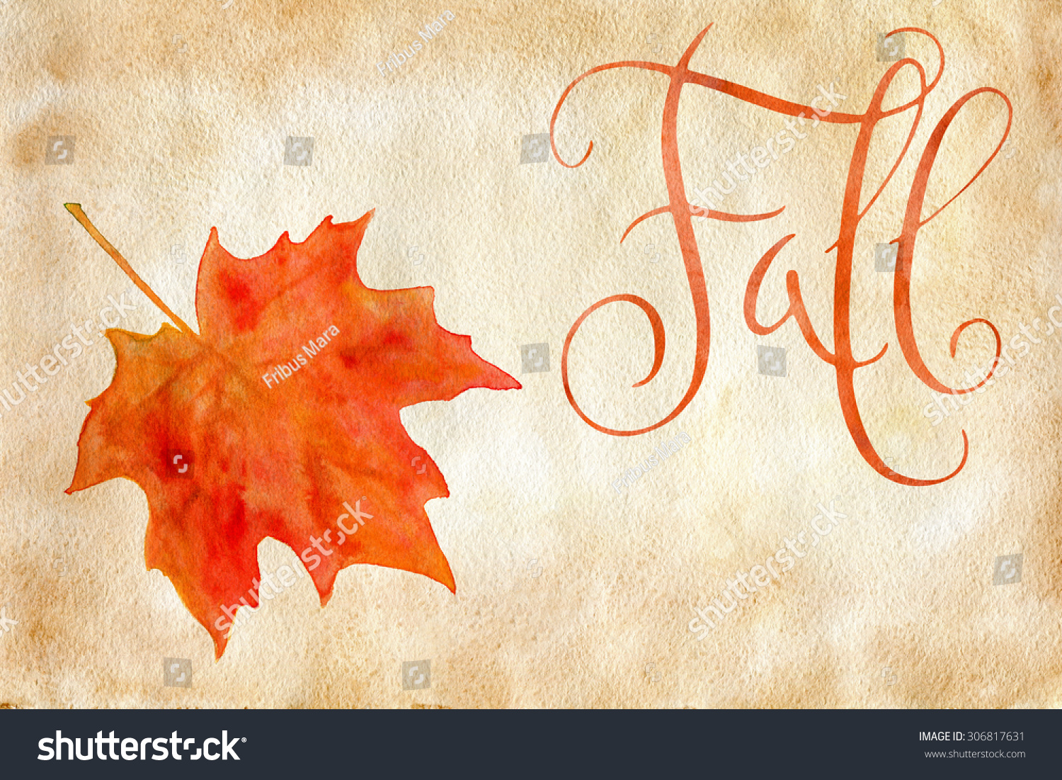 orange watercolor autumn maple leaf and handwritten word fall over
