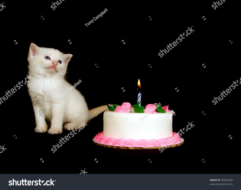 White Kitten Stands Near Birthday Cake Stock Photo Edit Now
