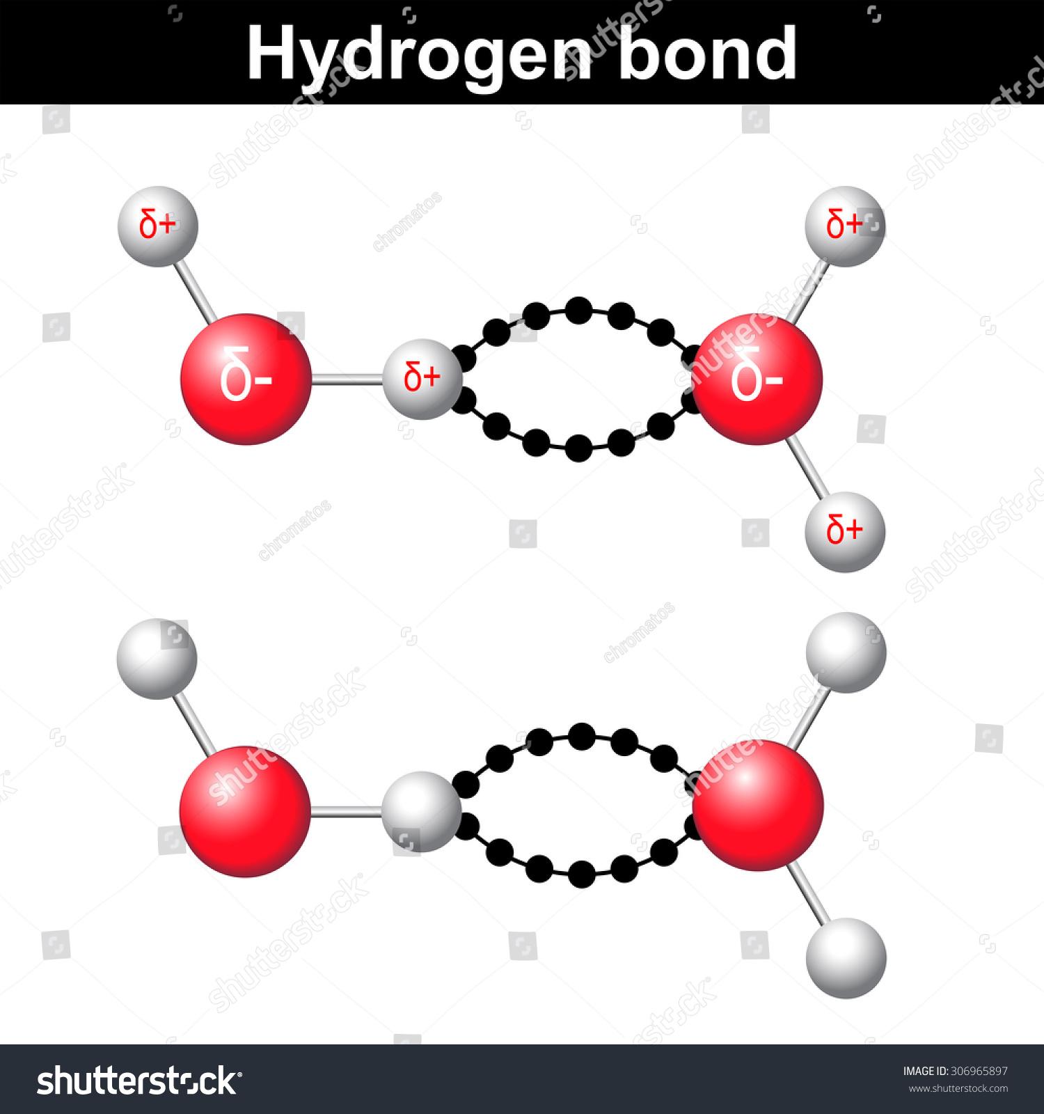 Hydrogen bonds in water article  Khan Academy