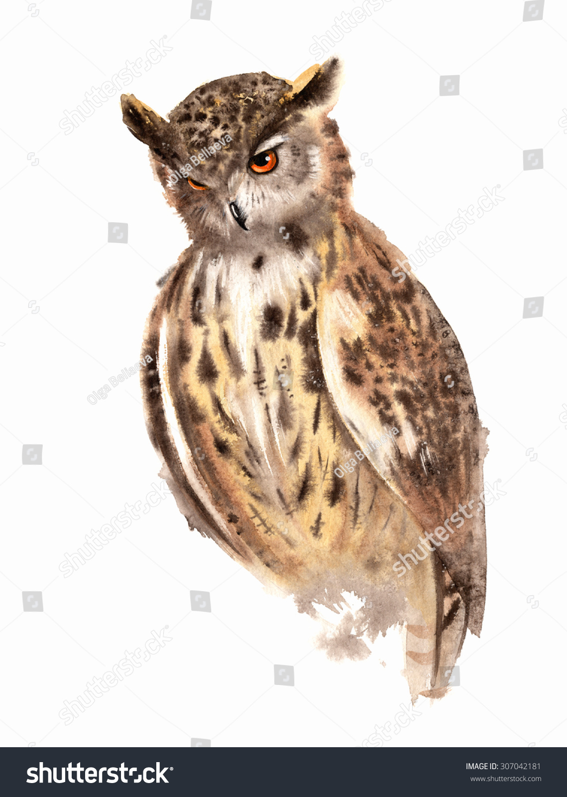 Great Horned Owl Watercolor Stock Illustration 307042181 Shutterstock