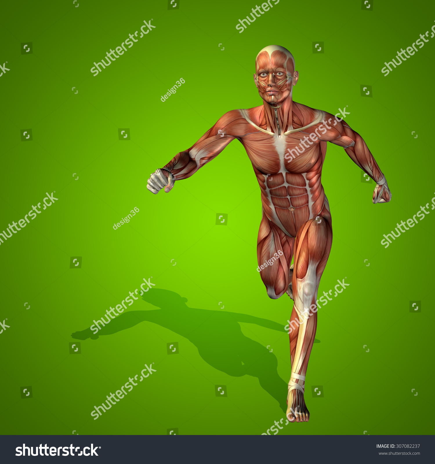 Conceptual strong human, man 3D anatomy body with muscle for health ...