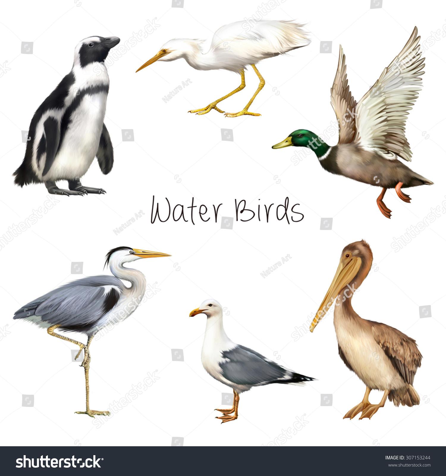 Stock Photo Illustration Of Water Birds Pelican Crane Bird Seagull Pen...