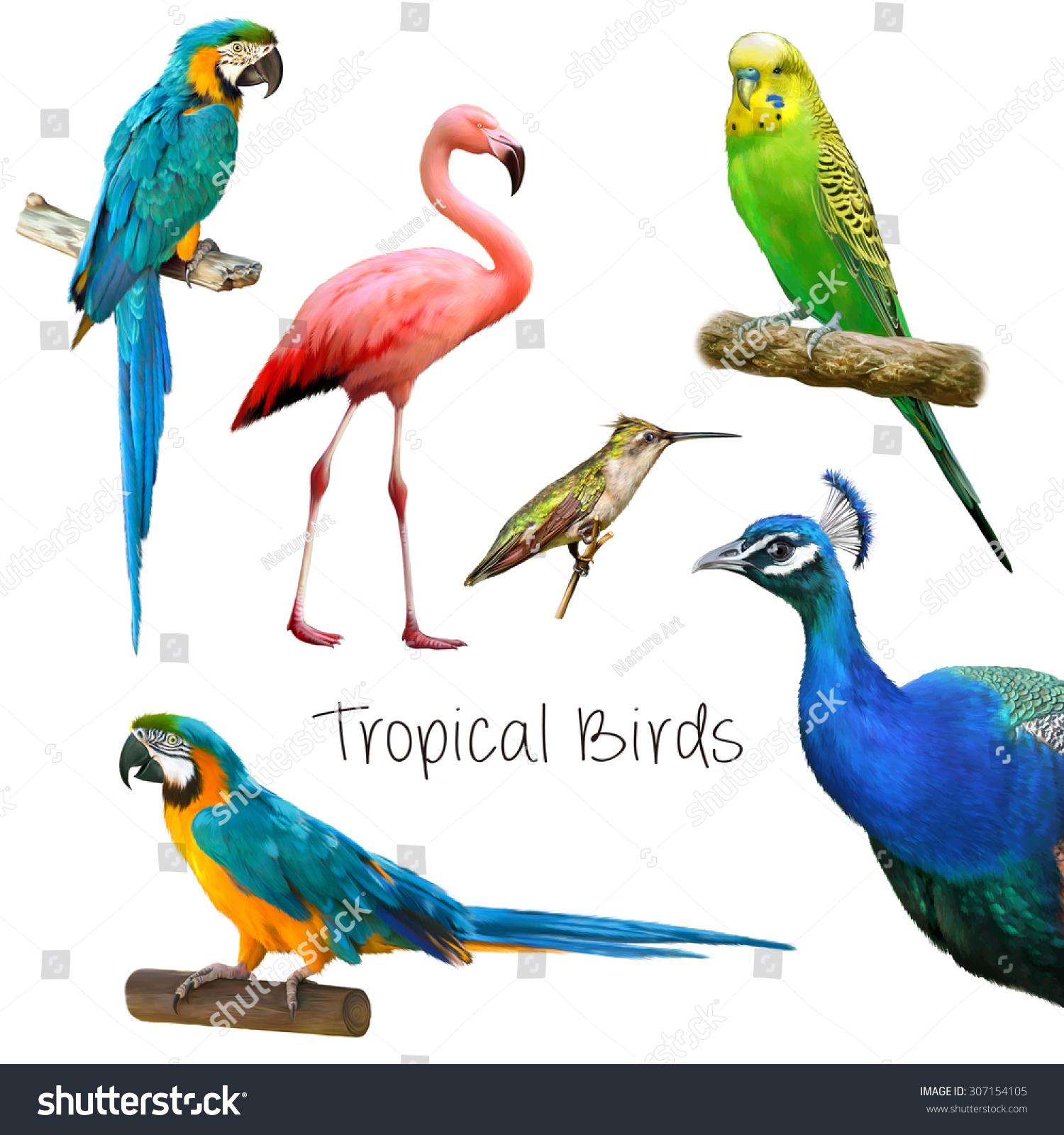 Tropical Birds | WeNeedFun
