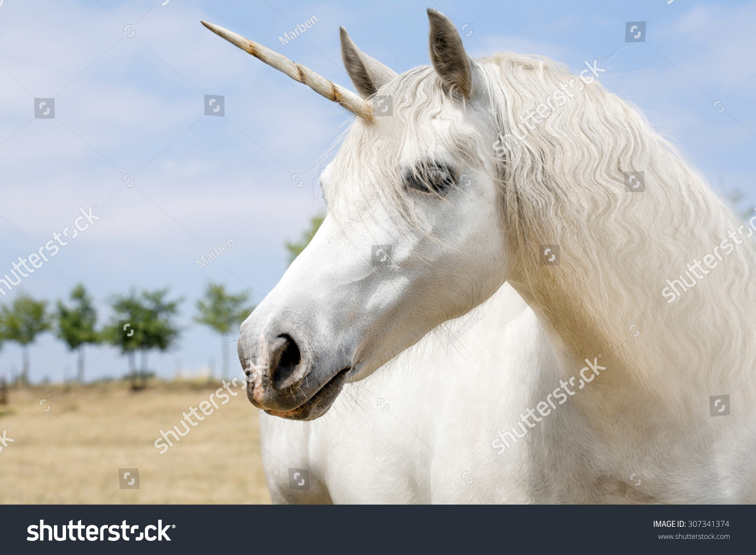 Unicorn Realistic Photography Stock Photo 307341374 ...