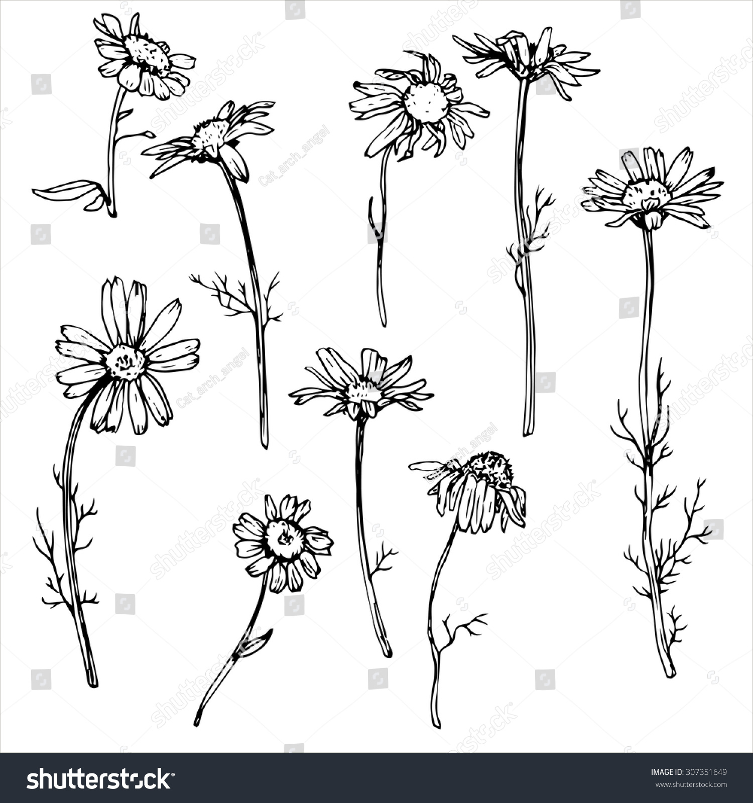 Daisy Flowers Floral Vector Set Ink Stock Vector Royalty Free