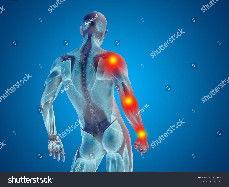 Atemberaubend Anatomie Und Physiologie Saladin 7. Auflage Pdf Ideen ...