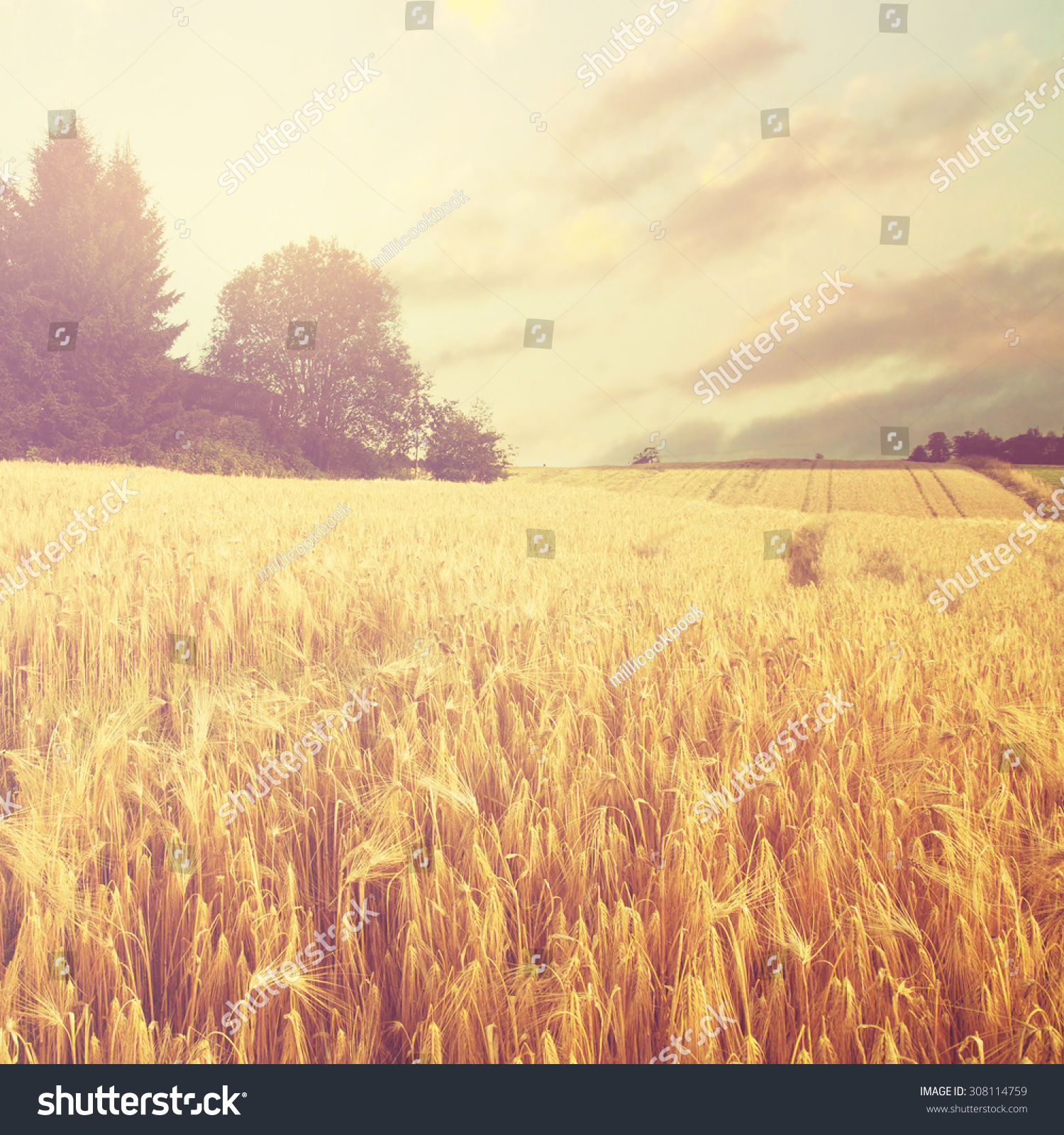 Norway summer Landscape with Wheat Field and Clouds #308114759