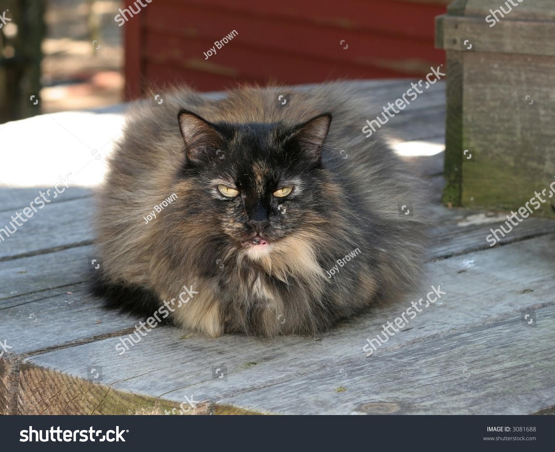 Funny Looking Cat Stock Shutterstock
