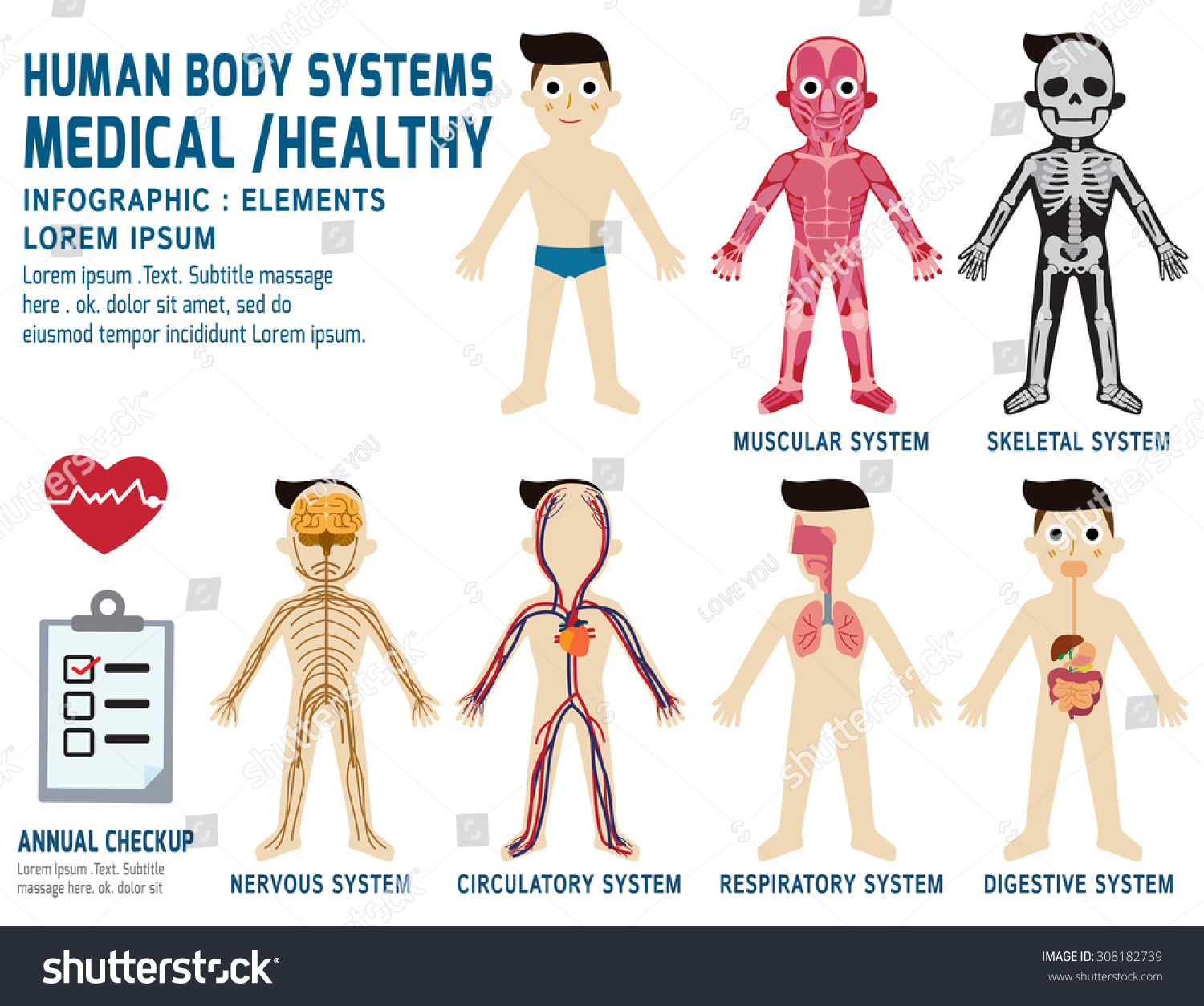 Human Body Systems Annual Checkupanatomy Body Stock Vector 308182739 ...