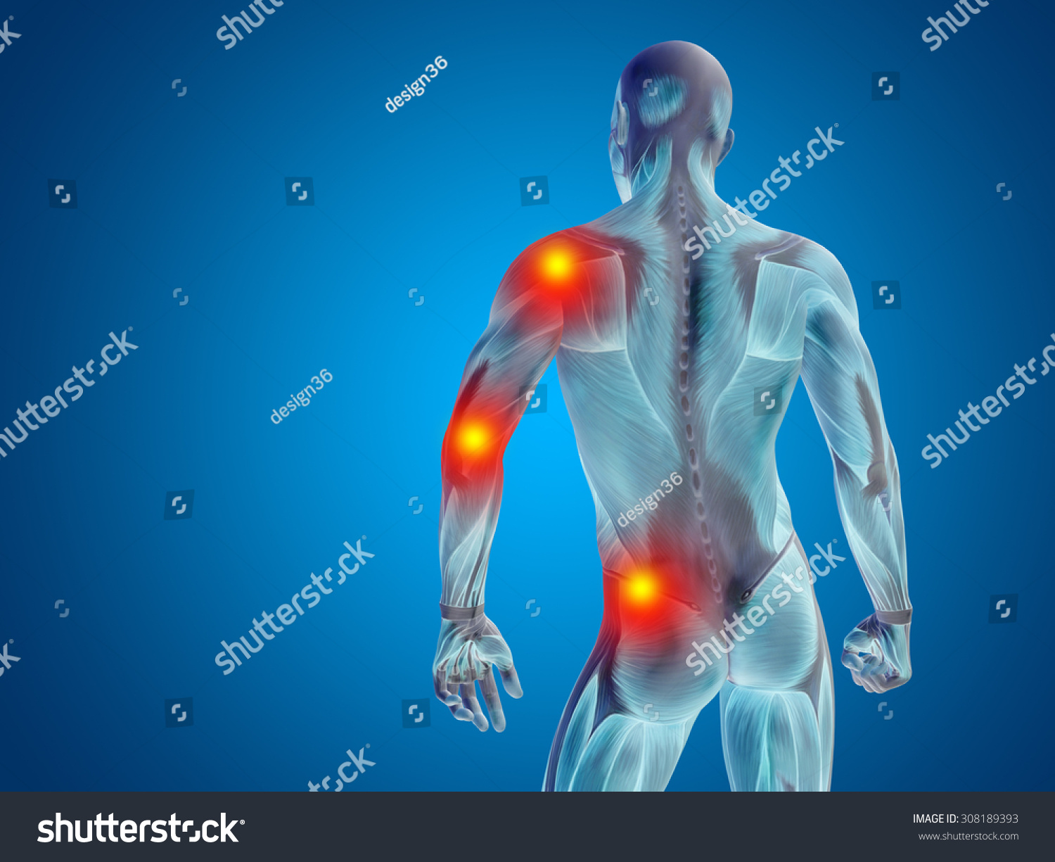 Conceptual 3 D Human Man Anatomy Upper Stock Illustration 308189393