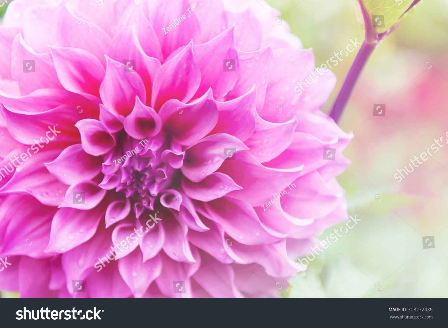 Flower background romantic flowers beautiful flowers stock photo flower background romantic flowers beautiful flowers made with sweet soft style color filters izmirmasajfo
