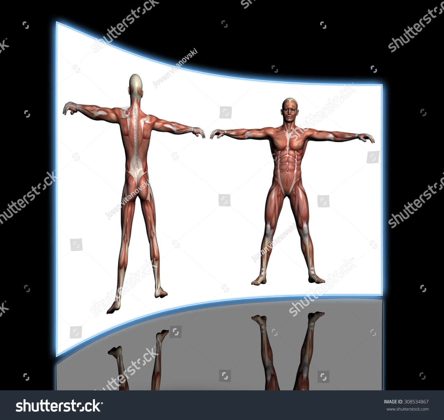 Human Anatomy Male Muscles Made 3 D Stock Illustration 308534867 ...
