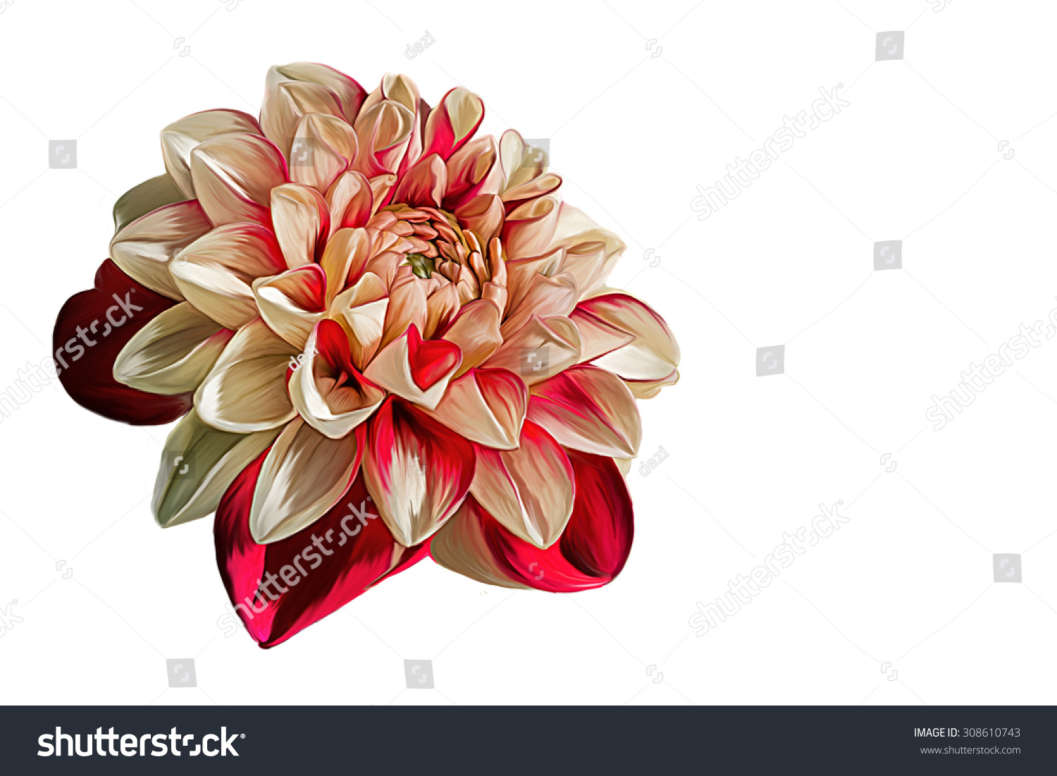 Drawing Oil Painting Dahlia Flower On Stock Illustration 308610743