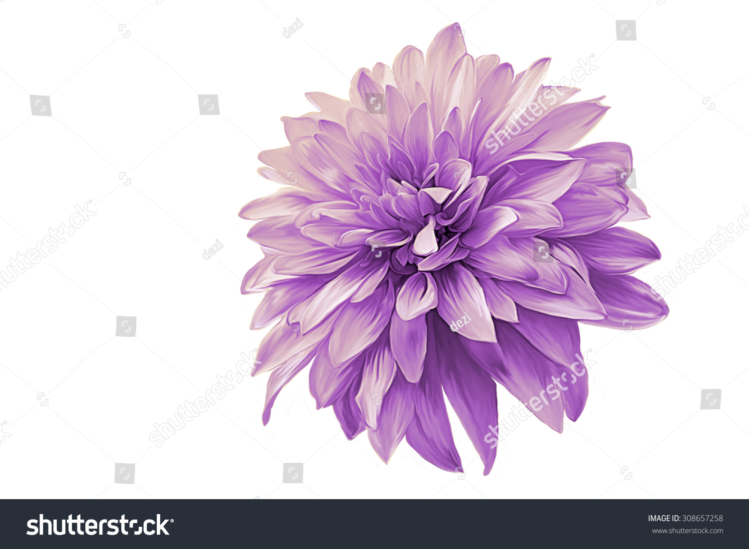 Drawing Oil Painting Dahlia Flower On Stock Illustration 308657258