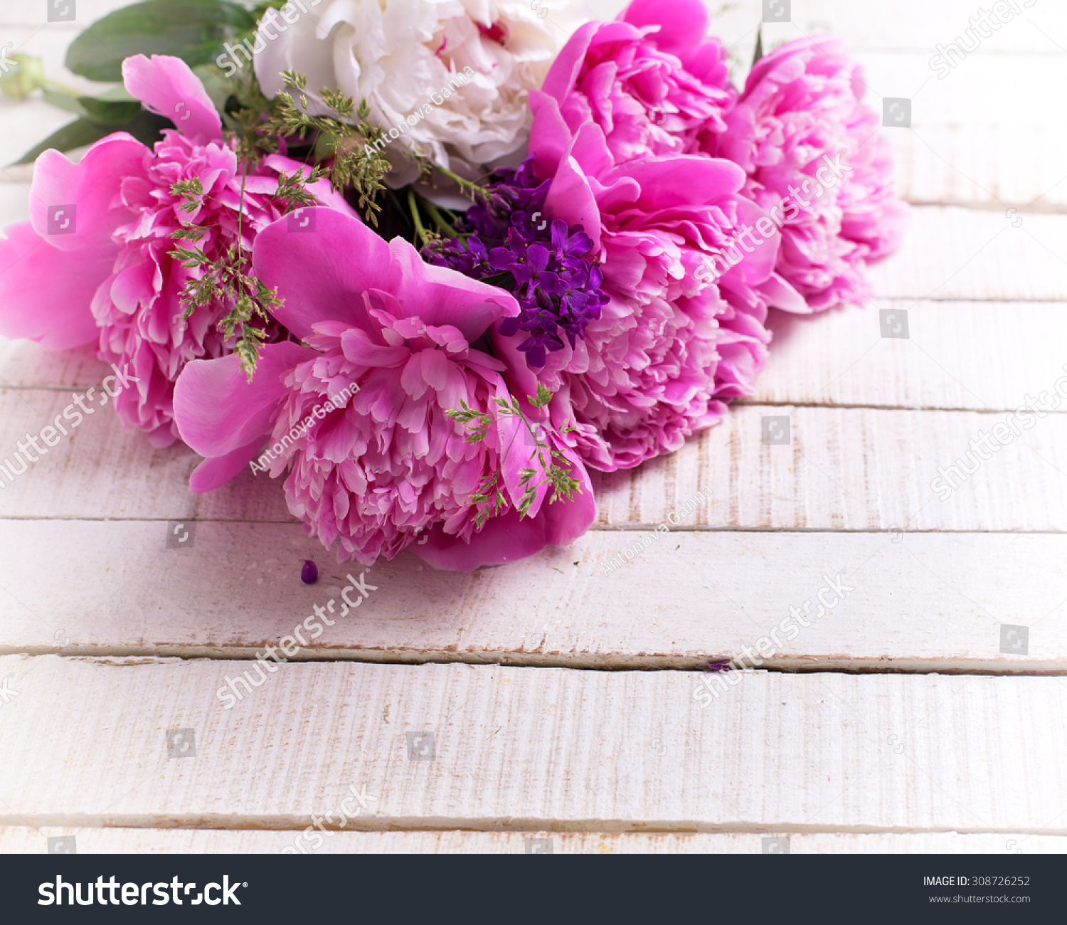 Fresh Pink And White Peonies Flowers On White Painted Wooden Planks