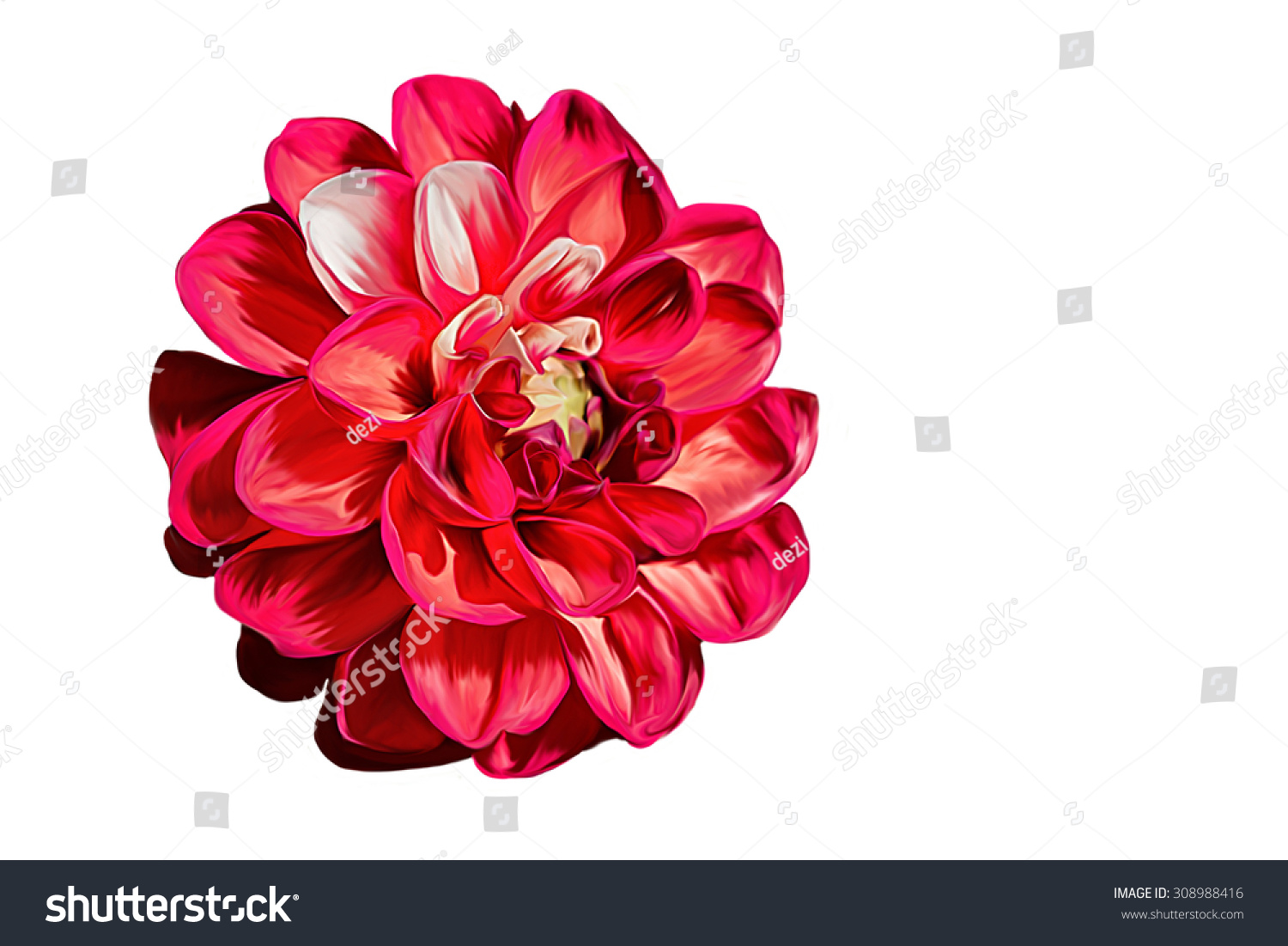 Drawing Oil Painting Dahlia Flower On Stock Illustration 308988416