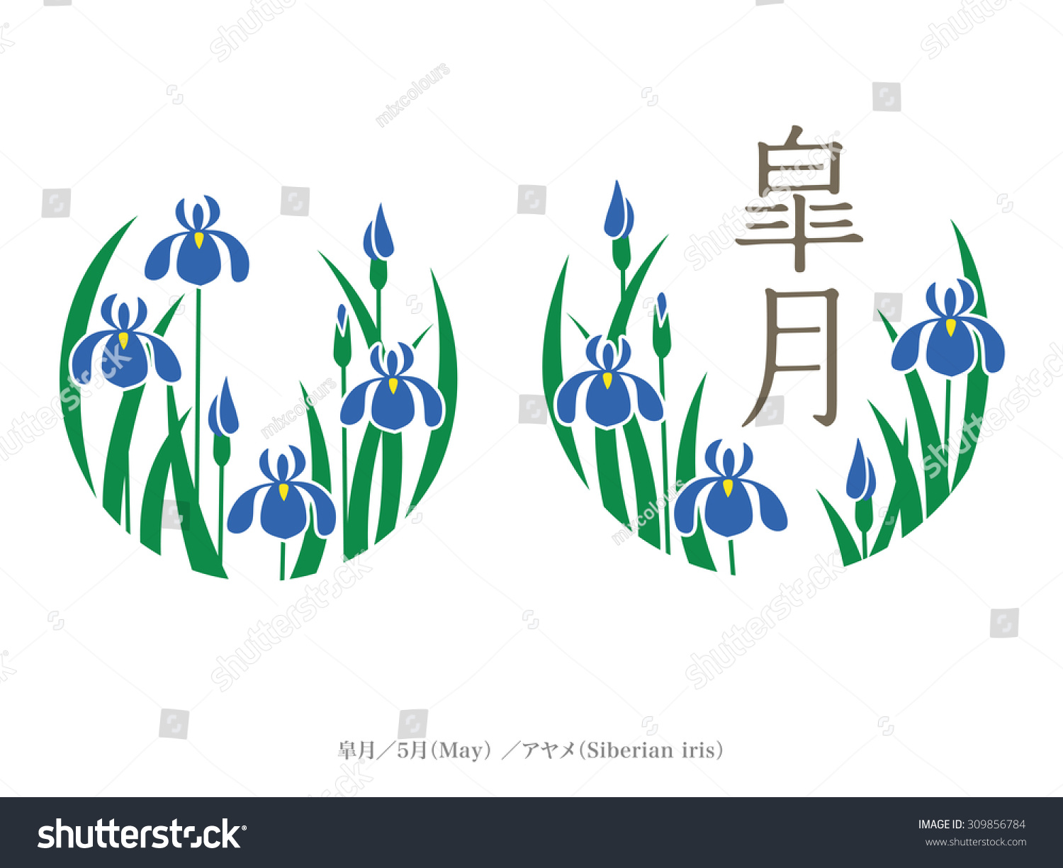 Birth Month Flower Name Month Japan Stock Vector Royalty Free