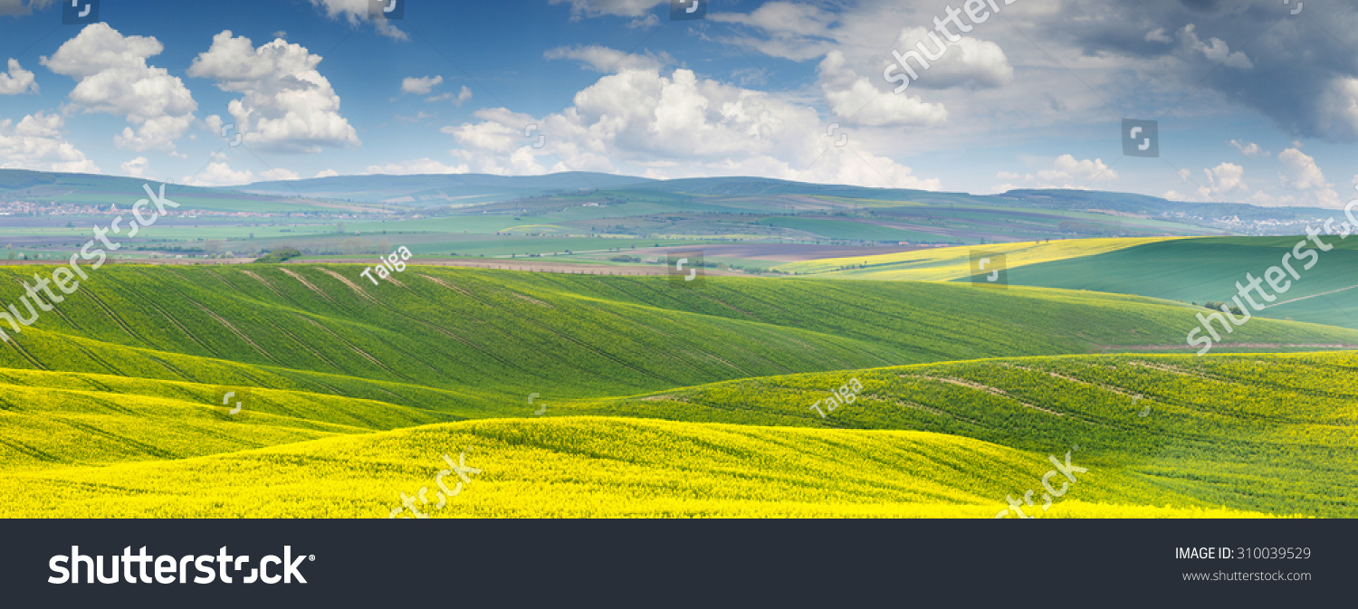 Panoramic background beautiful yellowgreen floral canola stock photo panoramic background of beautiful yellow green floral canola field with blue sky and clouds voltagebd Images